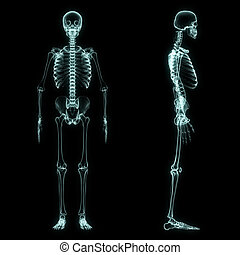 X-ray full body of skeleton in brightness blue with black...