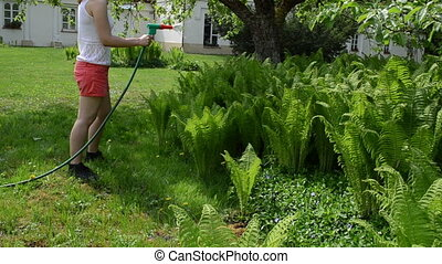 woman water fern plant - Attractive young woman in shorts...