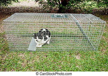 Humane Animal Trap - Cat trapped in a humane non lethal...