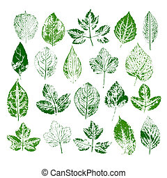 Paint stamps of different leaves isolated on white