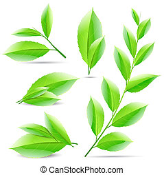 vector illustration set of a collage of green tea leaves