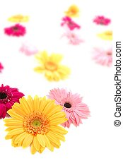Gerbera yellow flower colorful blur flowers background -...