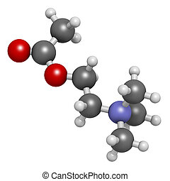 Acetylchloline (ACh) neurotransmitter molecule. Atoms are...