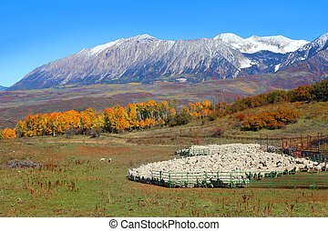 Sheep farm with autumn landscape - Sheep farm near Kebler...