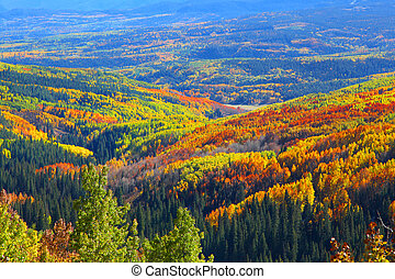 Carpet of autumn trees - Carpet of colorful autumn trees...