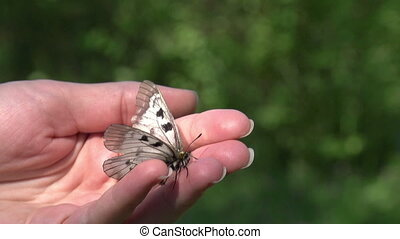 Butterfly Sitting on a Hand