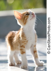 Adorable kitten - Cute and young red kitten looking up while...