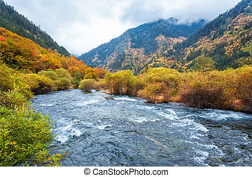 autumn forest in jiuzhaigou - autumn forest and flowing...