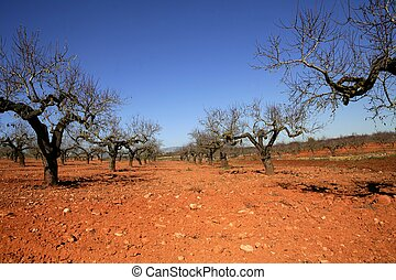 Peach tree field in red soil - Rainfed agriculture in Spain,...