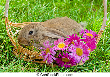 Easter bunny with eggs in basket