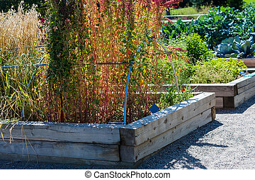 Urban garden - Organic urban garden in full growth at the...