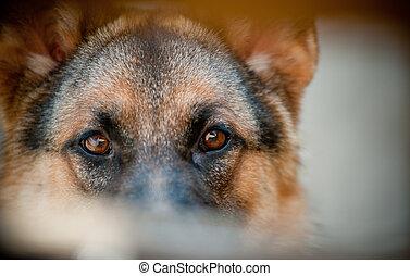 guard eyes