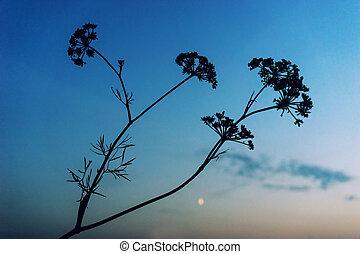 Bush plants against the blue sky