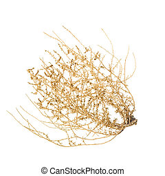 Rolling Tumbleweed - Bush of Crusty Dry Tumble Weed;...