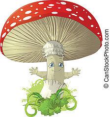 mushroom - poisonous mushroom fly agaric