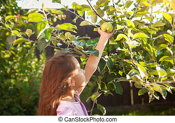 brunette girl picking green apple at garden - Little...
