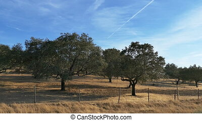 Fruit Trees in Agriculture Field, side view from car