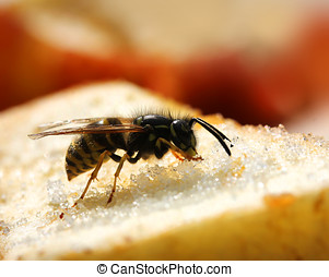 Wasps eating sweet food - Wasp eating sweet food close-up...