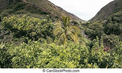 Iao Valley, Hawaii - 1080p, Landscapes of Hawaii, including...