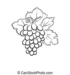 grapes - this is a vector illustration of grapes