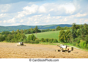 Two old harvesters working on a grain field in August