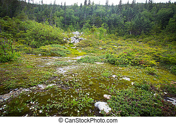 Alpine Tundra - Rugged alpine terrain at top of Mount...
