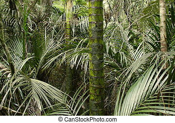 Jungle - New Zealand tropical jungle forest