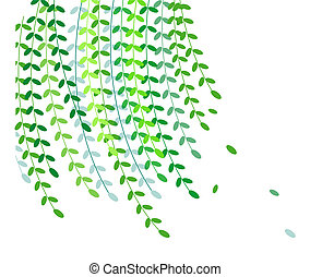 Willow leaves in a white background,used as texture