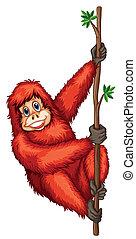 Orangutan - Illustration of an orangutan hanging on a vine