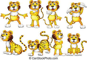 Tiger set - Illustration of a group of tigers