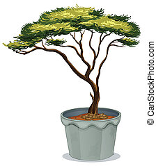 Bonsai - Illustration of a potted plant bonsai