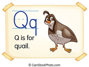 Letter Q - Illustration of a flashcard with letter Q