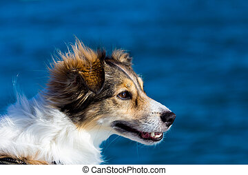 Happy dog on a boat in a windy day