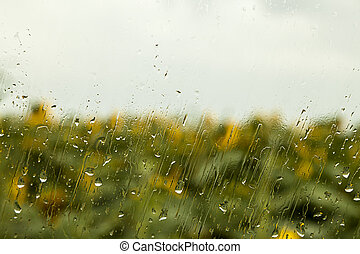 heavy rain drops on window with sunflower in the background
