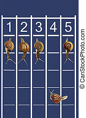Snails running on track with one snail going backwords