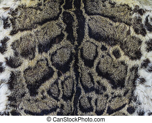 anublado,  (felis, Leopardo,  nebulosa), piel