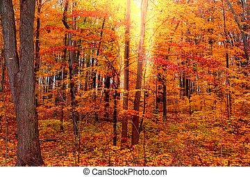 Bright red autumn trees - Bright autumn trees with sun flare