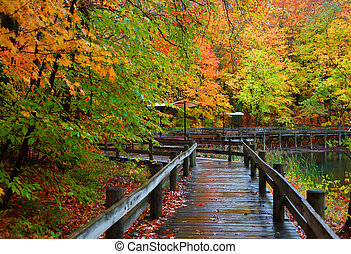 Autumn in Michigan - Wet board walk in autumn time