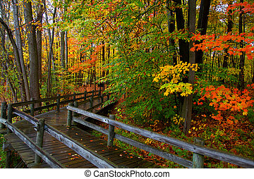 Board walk through autumn trees - Board walk through...