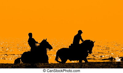 Horse riders - silhouettes of horse riders