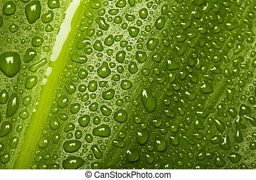 Waterdrops on leaf texture - Water drops on green leaf...