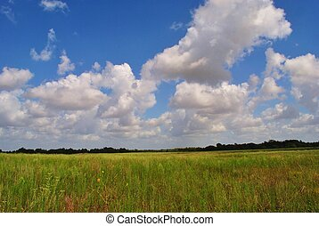 Texas coastal prairie  - Texas prairie and clouds.