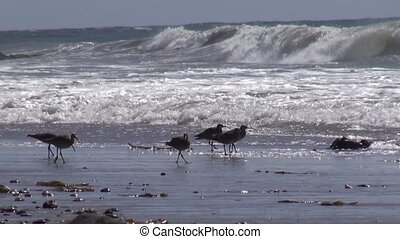 Seagulls Flying From Waves at the Beach Ocean waves crashing...