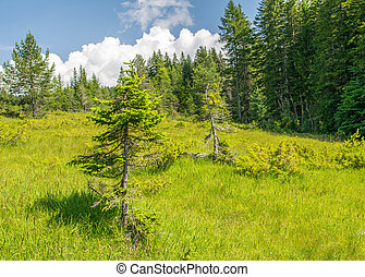 Beautiful alpin summer landscape. Trees and meadows with...