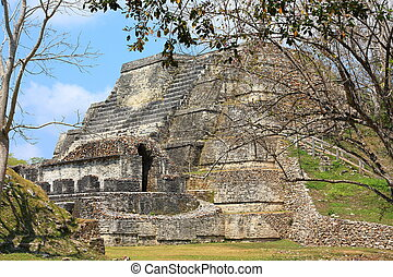 Altun Ha Mayan historic site - Restored template at the...
