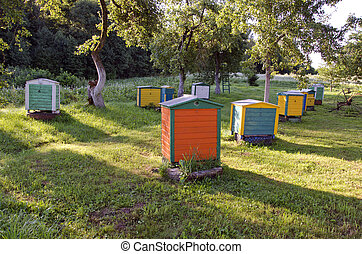 wooden colorful beehive group in summer farm garden - wooden...