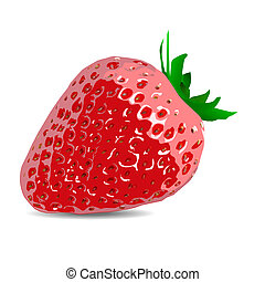 beautiful strawberries vector illustration of a realistic 10...