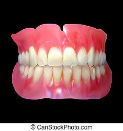 mandíbula, dente, mandíbula