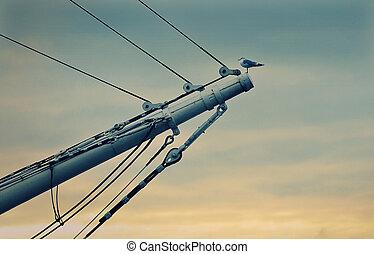 seagul on a sail ship