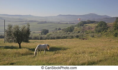 horse is grazed on a meadow in the early summer morning,...